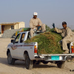 Alfalfa Delivery