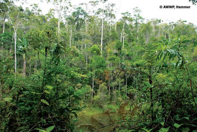 Andasibe_Nature_Reserve_01