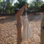 Dama Gazelle Newborn Weighing (Ms. Marie and Mr. Babu)