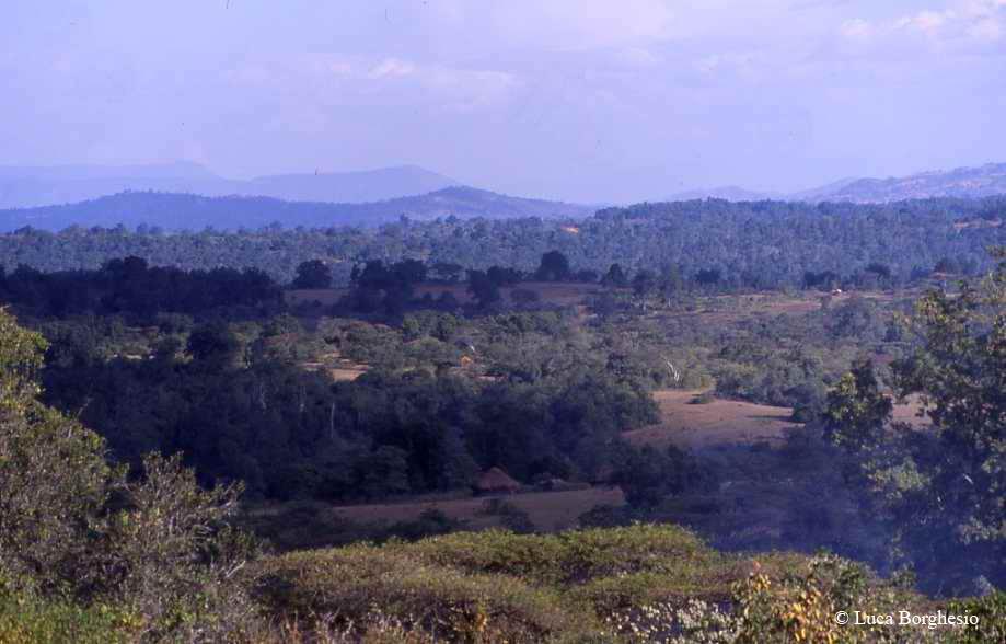 Kibre_Mengist_Forest_Ethiopia.Copyright_Luca_Borghesio_2003