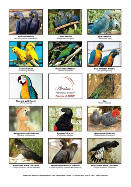 Poster Parrots_A4 [640x480]