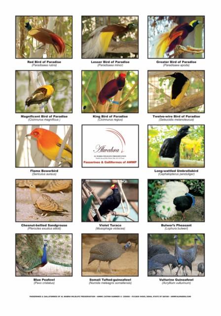 Poster Passerines&Galliformes_A4 [640x480]