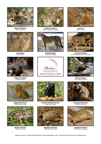 Poster_Mammals_A4.resized