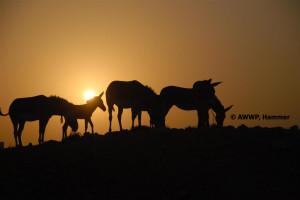 Somali_Wildass_Group_01