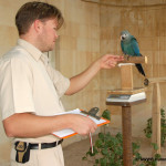 Weight Control of Spix Macaw (Mr. Reyan)